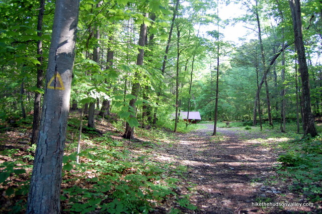 Ferncliff_Forest_0403